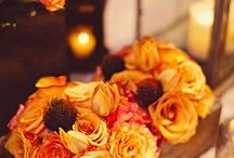 WEDDING / by Molly Franco