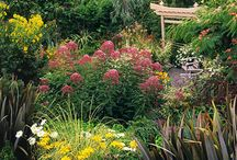 Butterfly and Hummingbird Garden / Flowers to attract butterflies and hummingbirds / by Christine Guernsey
