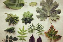 Leaves - Lehtiä