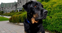 Fairmont Pets: Canine Ambassadors / Fairmont Hotels offers a distinctive service at select hotels: resident hotel dogs known as Canine Ambassadors. Take one for a walk, give a cuddle or just bask in the cuteness.