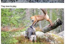 Ville dyr