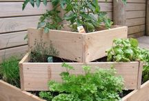 garden of vegetable/veteményes