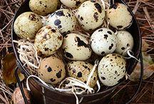 Bıldırcın Yumurtasının Faydaları / Bıldırcın yumurtasının faydaları saymakla bitmiyor.