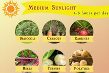 Sunlight need vegetables