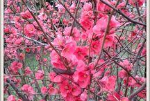 Spring - Ilkbahar - Tavasz