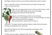 Gardening Tips & DIY's / by Amber Niebuhr