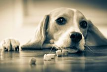 Beautiful Little Weirdos / Photo entries for the South African Beagle Photobook Competition