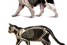 Kutya anatómia / Canine anatomy