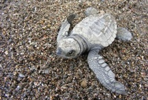 Passionate about Sea Turtles / by Jennifer Saxby-Burkhart