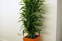Plantes - Déco