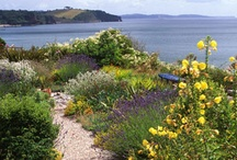 Seascape Planting / by Susan Day