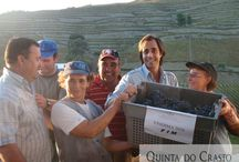 ENJOY OUR HARVEST / Harvest at Quinta do Crasto during the years.