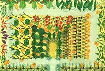 Companion planting gardens / Companion planted gardens for healthy vegetables