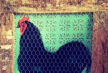 Quadri in rete / quadri dipinti a mano o stampe con cornici recuperate da vecchi bancali avvolte nella rete metallica da pollaio