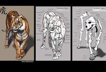 dibujo tigre blanco