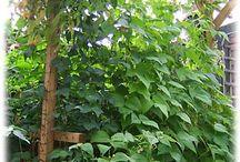 Hang Around With Me / Vertical Garden Ideas
