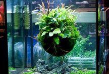 Aquarium Design Ideas @Gazuntai.com