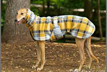Whippet coat / Yellow plaid
