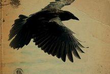 BIRDS/ ptaki