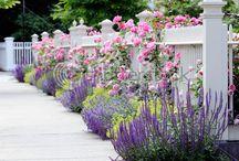cottage garden / by Bonnie Broyles