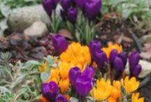 Flowers, plants & nature