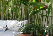 tanaman taman