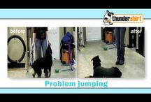 AHOW-Behavior Tips/Thundershirt