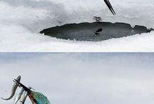 jégmadàr és a hal