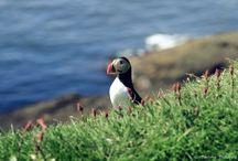 Faroe Islands / Some of my pictures taken in faroe islands