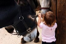 Horse Therapy for Children
