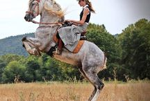 spanish riding andalusian