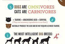 Curiosità su cani e gatti :o) / Notizie curiose sui nostri migliori amici pelosi