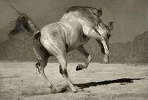 Horses <3 / by Morgan Wadhams