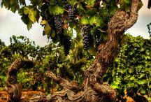 Barossa Old Vine Charter / by Barossa Dirt