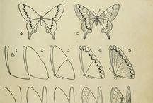 Butterflies sketchs