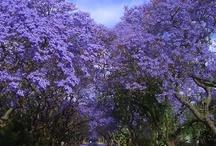 Zimbabwe / My home land