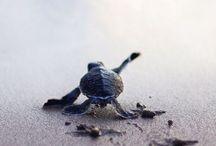 Kleine schildkröten
