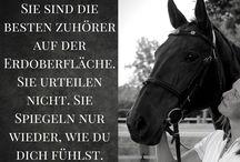 Pferde/ Reiter