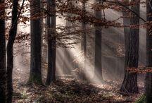 Seasons - Autumn