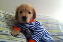 Dog and Puppy PJ's
