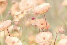 | f | Flores
