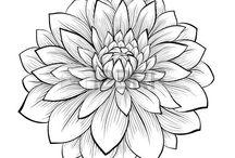 Hand Drawings / by Robin Koza / KOCO Creative