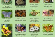 New Zealand Butterflies including Monarch / New Zealand