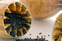Alles over zaden / Zelf zaden winnen voor je moestuin, zaden aanschaffen en bewaren