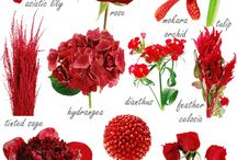 BBFLORI Inspiration: Red / Color board for wedding florals and arrangements in red.  / by Gisella Cianci