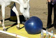 Horse Tricks