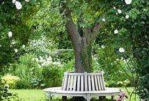 Garden bench round tree