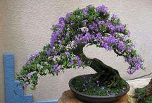 Bonsai / mini növények
