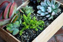 Outdoor space / Outdoor living and gardening ideas.