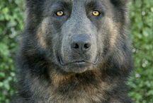 reference dog